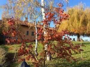 Come aprire un Bed and Breakfast, affittacamere o casa vacanze in Italia: normative, leggi e consigli utili